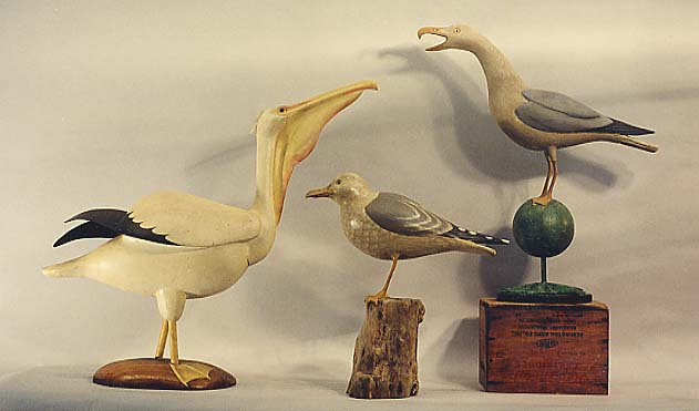 Pelican, Gull, and Barking Gull